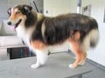 Puppy-1-4
