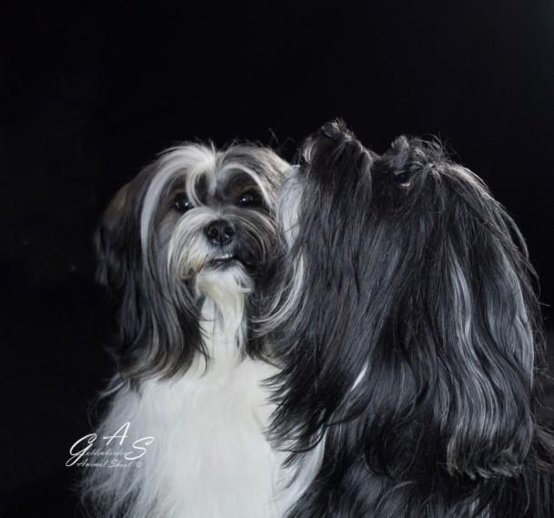 Canvas 60 x 60 2 cm kleur (Custom)